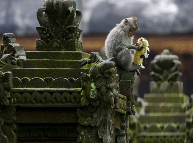 Bosque De Los Monos