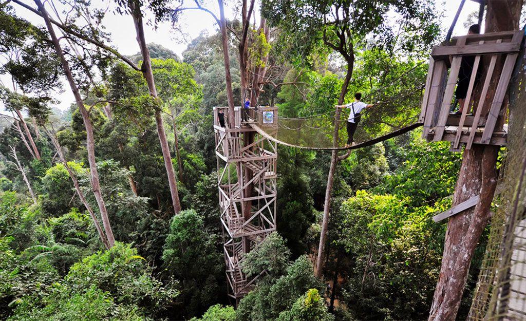 2. Hutan Lindung Sungai Wan